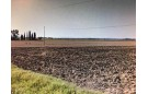 TERRENO AGRICOLO in VENDITA a PIOMBINO - LA SDRISCIA