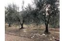 TERRENO AGRICOLO in VENDITA a FOLLONICA - CASSARELLO