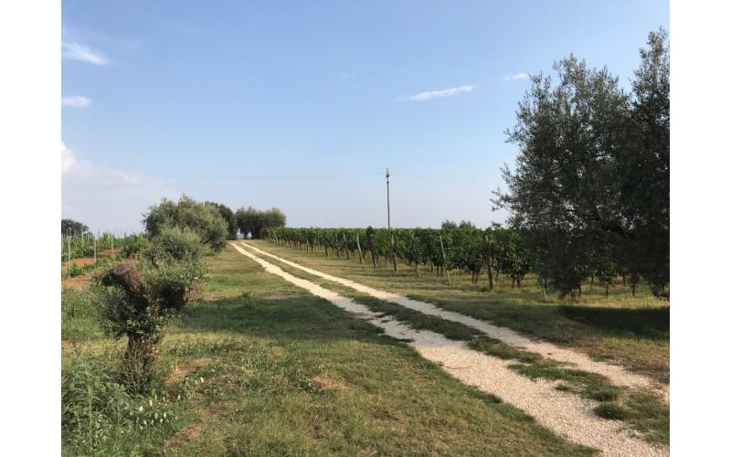 TERRENO AGRICOLO in VENDITA a PITIGLIANO - GENERICA