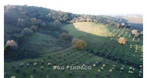 GROSSETO - CENTRALE CENTRALE TERRENO AGRICOLO VENDITA
