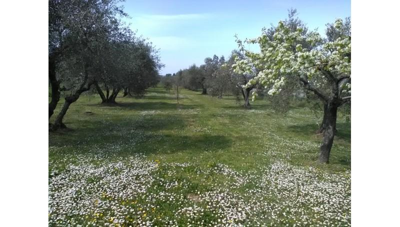 TERRENO AGRICOLO in VENDITA a GAVORRANO - BAGNO DI GAVORRANO