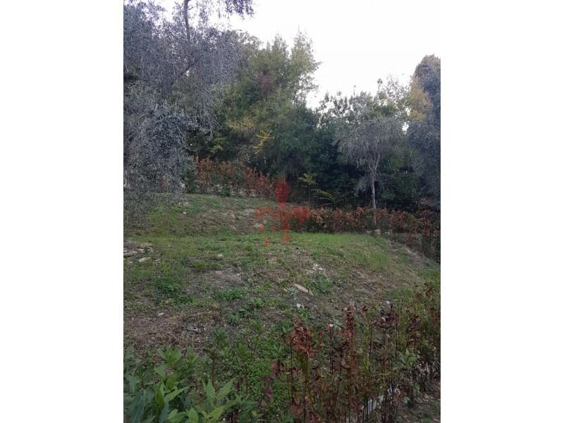 portaromana-giardino