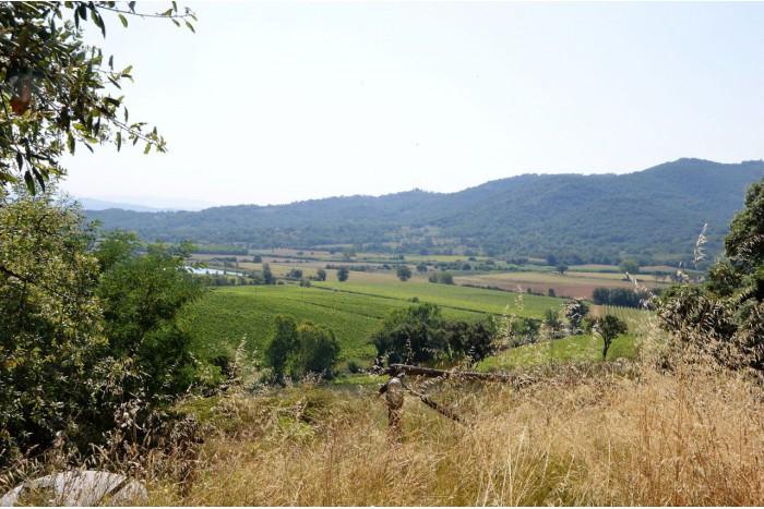 AZIENDA AGRICOLA in VENDITA a GAVORRANO - CALDANA