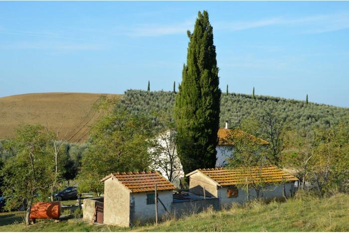 FARM on SALE in CAMPAGNATICO - ARCILLE