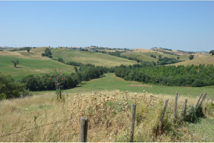 COUNTRY HOUSE on SALE in CAMPAGNATICO - ARCILLE